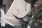 Maltempo a Palermo, paura al Foro italico: ramo cade sui tavolini di un bar, nessun ferito