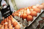 Catania, trovate 700 uova in decomposizione in un supermercato: una denuncia