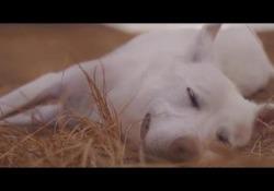 In anteprima una clip el cortometraggio «Angelo, vita di un cane di strada» di Andrea Dalfino