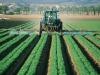 Le imprese agricole italiane hanno bisogno di una forte tutela in vista delle prossime scadenze in ambito europeo. E lappello lanciato dal presidente di Confagricoltura, Massimiliano Giansanti  (fonte: Pxhere)
