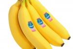 Bollino rosa per la banana Ciquita