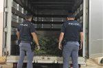 Scoperta una serra di marijuana in Corso dei Mille a Palermo, arrestato un 23enne