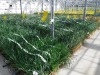 Ue:campagna Cambia la terra, direttiva pesticidi va rivista