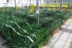 Coalizione 100 ong, pubblicare dati test sicurezza pesticidi