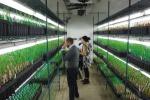 Sui pesticidi Pe accelera l'iter del dossier su trasparenza