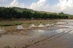 Maltempo: Coldiretti, gravi i danni per l'agricoltura