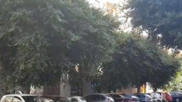 Mancata potatura degli alberi, disagi in via Massimo D'Azeglio a Palermo