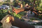 Temporale a Palermo, alberi caduti e strada chiusa: il video del disastro in viale dell'Olimpo