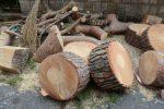 Comiso, dissenso per il taglio degli alberi della scuola materna Don Bosco: tutto rinviato