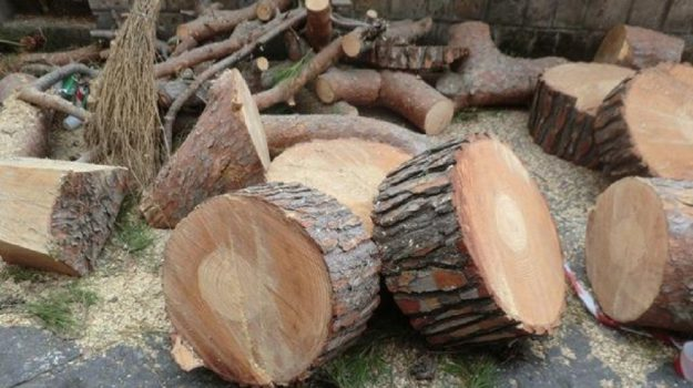 alberi scuoola don Bosco Comiso, Ragusa, Cronaca