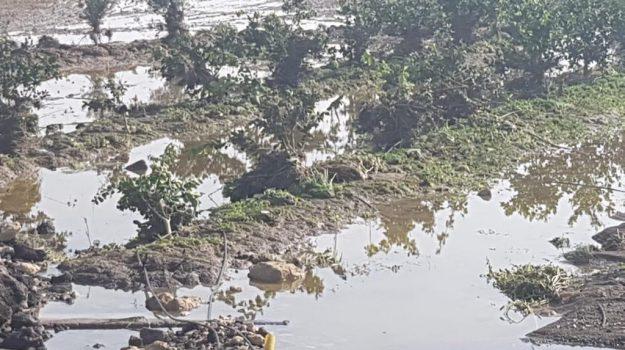 Maltempo, campi ancora allagati dopo l'ondata di maltempo - Le foto