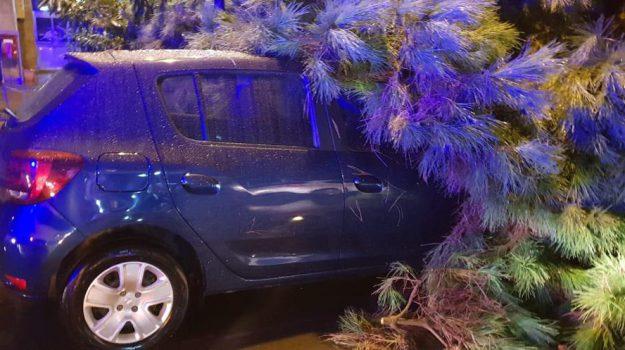 Alberi caduti sulle auto: le foto del maltempo a Palermo, disagi anche nella Sicilia orientale