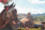 Un viaggio senza tempo in sella ai muli e con i carretti a Calatafimi