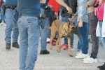 Blitz antidroga nelle scuole di Agrigento, sequestrati trenta spinelli