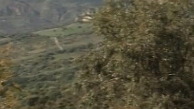 Verde urbano a Palermo, nuovi appalti per la manutenzione