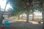 """Comiso, alberi della scuola """"Don Bosco"""" da tagliare: i cittadini si mobilitano"""
