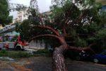 Il maltempo si abbatte su Messina, strade allagate e alberi caduti