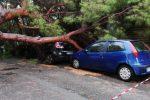 Maltempo, il forte vento abbatte gli alberi: le immagini da Messina