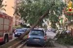 Scirocco a Palermo, alberi e rami per strada: vigili del fuoco al lavoro in via La Franca