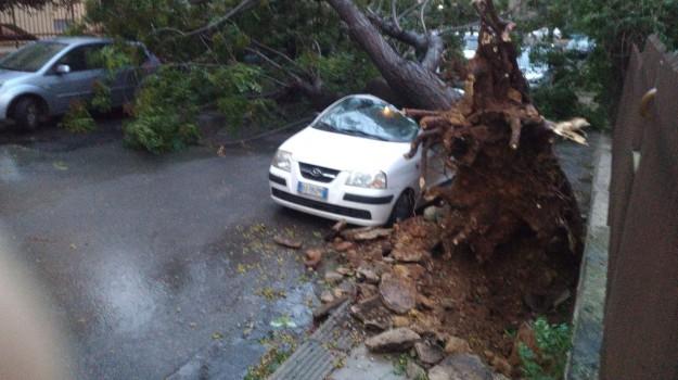 alberi caduti maltempo palermo, scirocco alberi caduti palermo, scirocco palermo, Palermo, Cronaca