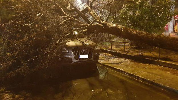 alberi caduti, allagamenti, maltempo palermo, Palermo, Cronaca