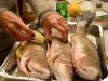 Italiani fish lovers già da bambini, 1 volta su 5 preferiscono il surgelato