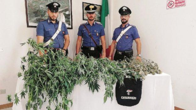 piantagione sommatino, Caltanissetta, Cronaca