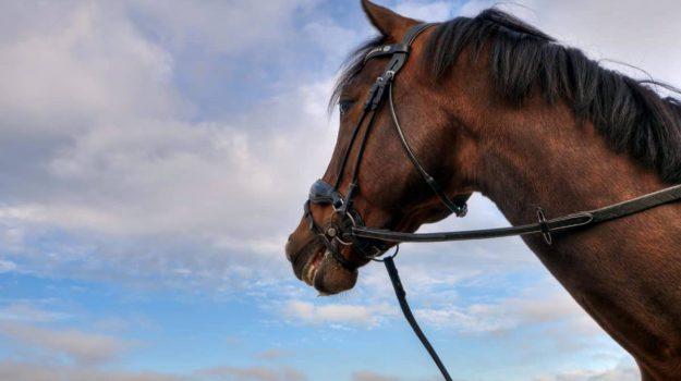 fiera mediterranea del cavallo, programma, Sicilia, Sport