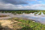 Maltempo nella Sicilia orientale, distrutte coltivazioni di agrumi e ortaggi. Coldiretti: disastro annunciato