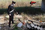 Dieci tonnellate di rifiuti in provincia di Agrigento: scoperte 12 discariche abusive