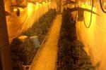 Palermo, trovata una serra di marijuana in un cunicolo dello Zen 2: sequestrate 115 piantine