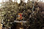 Scoperta una serra di piante di cannabis in un magazzino a Partinico: un arresto