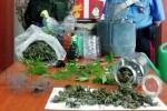 Coltiva la marijuana per poi venderla nella sua sala giochi, un arresto a Biancavilla