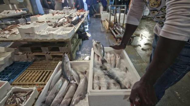 mercato ittico, pesce, sequestro, Trapani, Cronaca
