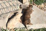Strage di cani a Ragusa, trovati morti 6 cuccioli per avvelenamento