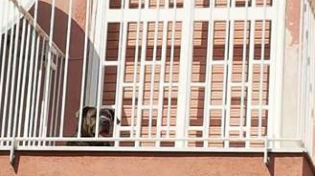 lasciano il cane in balcone a Catania, Catania, Cronaca