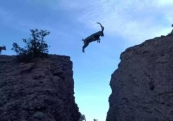 Animali che sono perfetti scalatori. Il video dalla Spagna