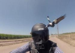 Il video è stato girato da un motociclista durante un viaggio in Australia.