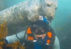 Gesti teneri nelle acque al largo delle Isole Farne