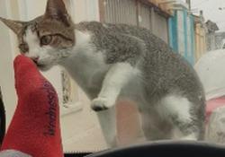 Il gattino sale sul cofano e si avvicina al parabrezza