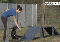 La gatta e il cane che da più tempo vivono nel parco canile dell'Enpa di Monza oggi fanno parte della famiglia del Corriere