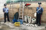 Sorpresi a rubare cento chili di olive a Campobello di Mazara, due arresti