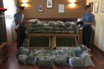 Marijuana, sequestro da record nelle campagne di Naro: 3 persone arrestate, uno è un dipendente comunale