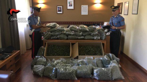 arresti naro, droga, marijuana, Agrigento, Cronaca