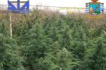 Maxi sequestro di marijuana a Partinico, nomi e foto
