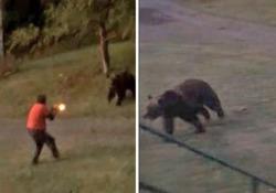L'attacco dell'orso all'uomo che cercava di allontanare lei e i cuccioli dalla sua proprietà