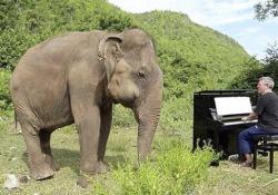 La bella storia di Paul Barton, l'uomo che suona agli elefanti
