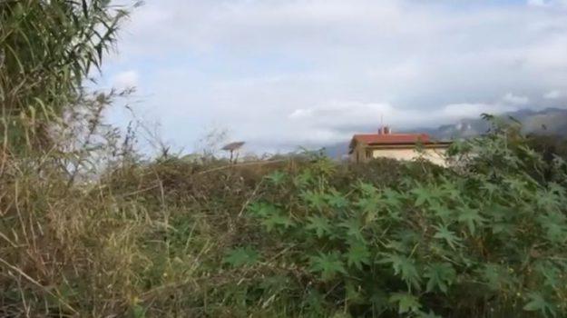 """Emergenza topi a Monreale, una residente: """"A casa ne ho uccisi 150, dormo in macchina per la paura"""""""