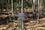 La foresta di Harvard, una sorta di laboratorio all'aperto nel quale sono stati scoperti 16 virus giganti (fonte: Jeff Blanchard)