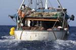 Wwf, a rischio tonno e squali, massacro per pesca continuerà